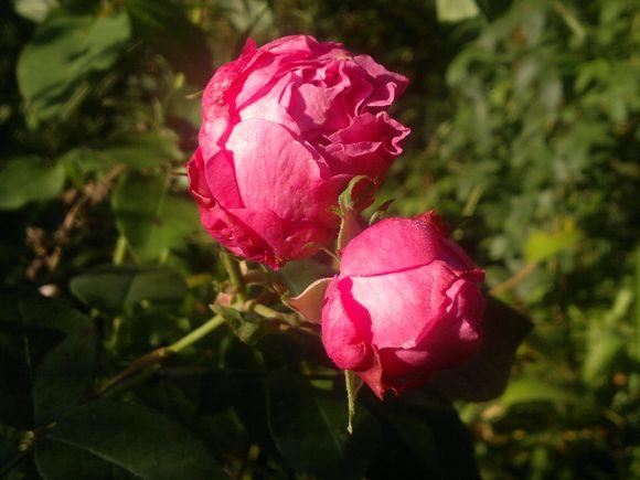201110011894.jpg