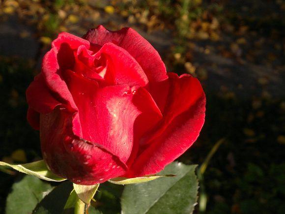 201110011897.jpg